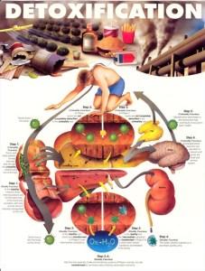 toxine-detoxifiere